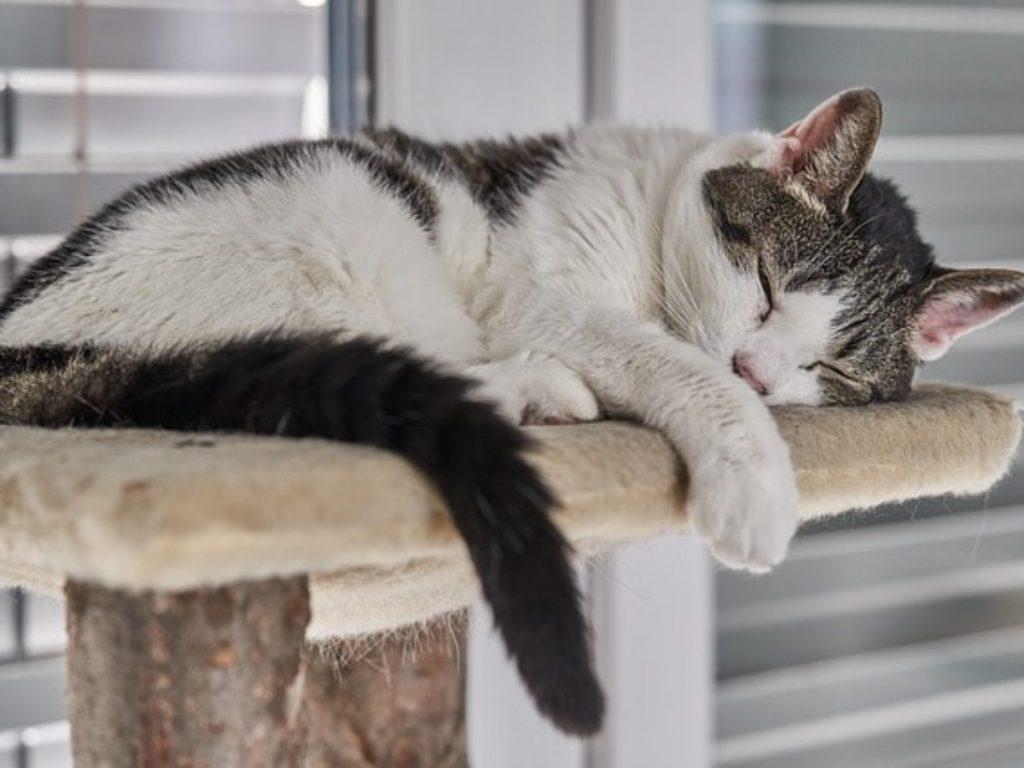 rascador descanso gatos