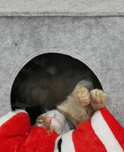cama para gatos piupet parque atrayentes