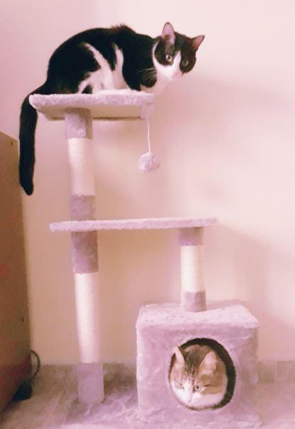 estructura para gatos