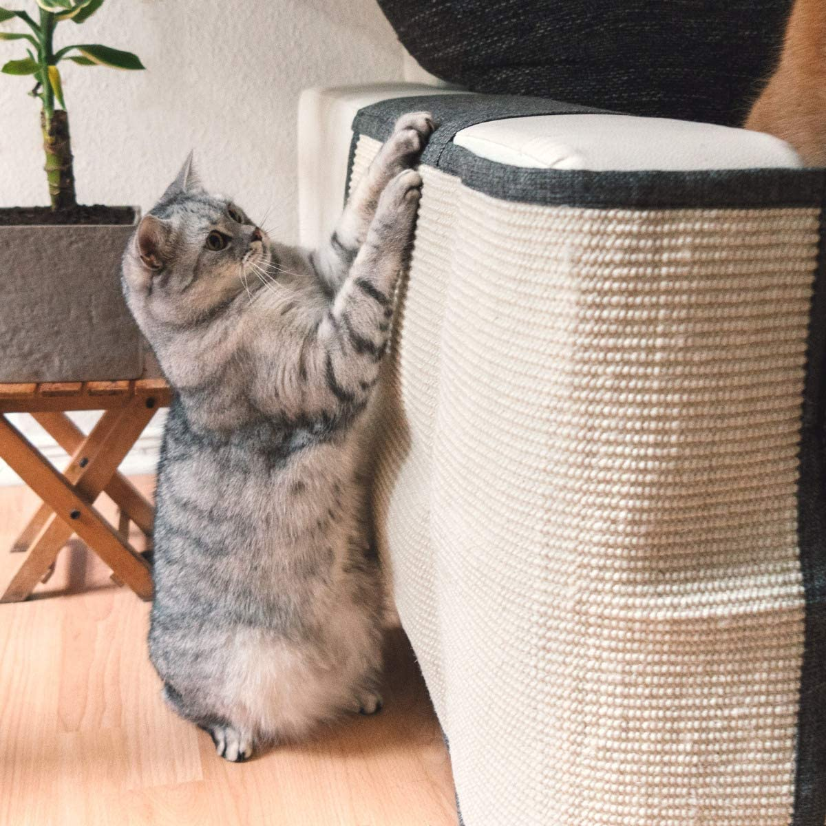 rascadores para gatos baratos