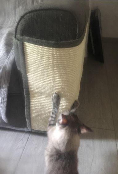 rascador para gatos grandes