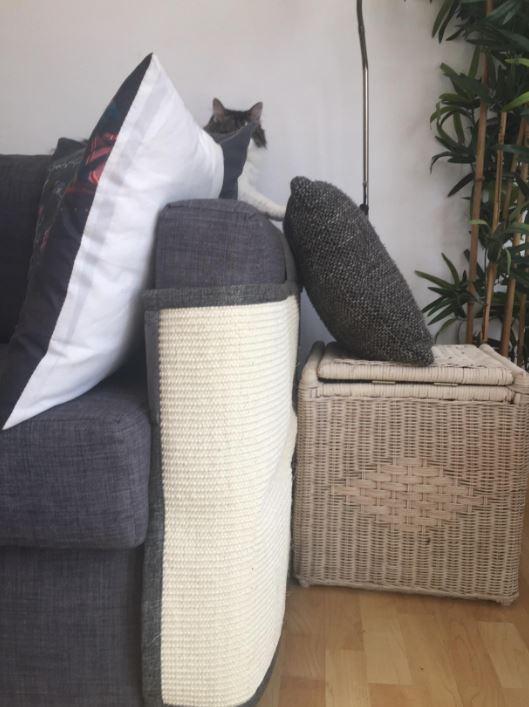 comprar arañador para gatos grandes