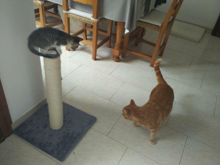 poste económico para gatos
