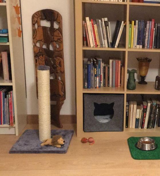 juguetes para gatos rascadores